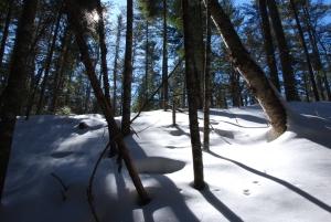 Bois, neige et soleil